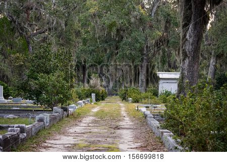 Grave Lined Dirt Road through spanish moss covered like oak trees in cemetary