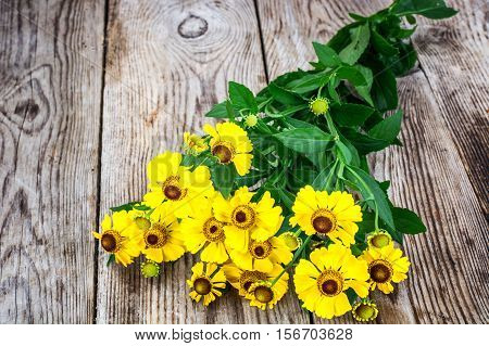 Helenium Flowers on Wooden Rustik Background Natural Photo