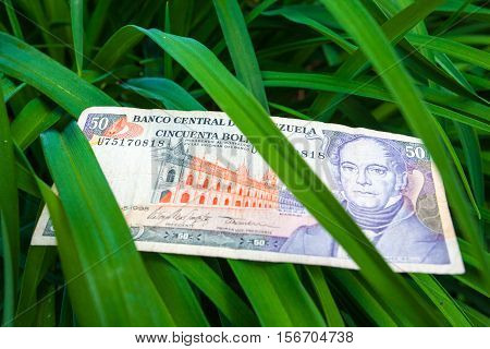50 Venezuelan bolivares bank note on the leaves in the forest