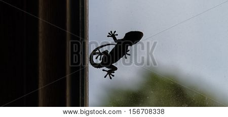 Silhouette of a small gecko on window