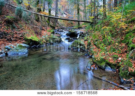Crystal clear mountain creek flowing through autumn fir and beech forest lakelet and fallen trunk over stream