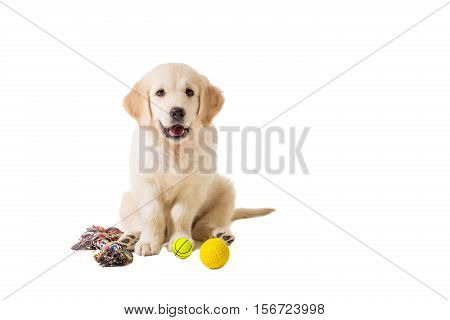 puppy golden retriever on a white background isolated. fun sitting, looking at the camera