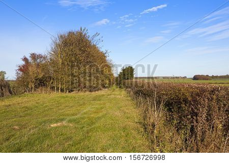 Scenic Bridleway In Autumn