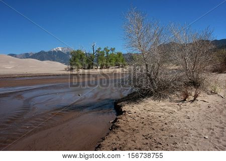 Sparse trees cling to the high desert sands in spring time as the shallow waters of Medano Creek flow through the Great Sand Dunes National Park near Alamosa, Colorado.