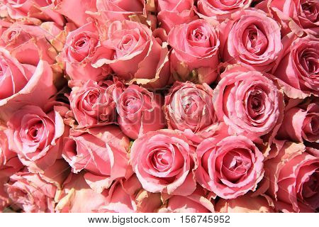 Pink roses in a big bridal bouquet and centerpieces