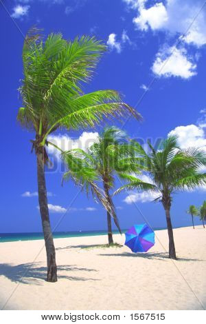 Palm Trees On The Beach With Umbrella