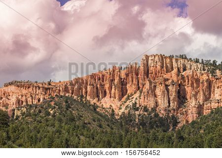 red rocks contrast with the green pines in a southern Utah landscape