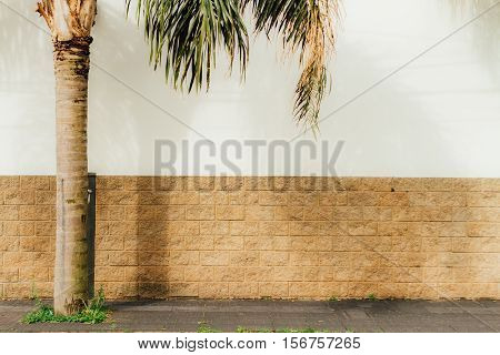 White Wall With Slabs With A Palm Tree And Its Shadow