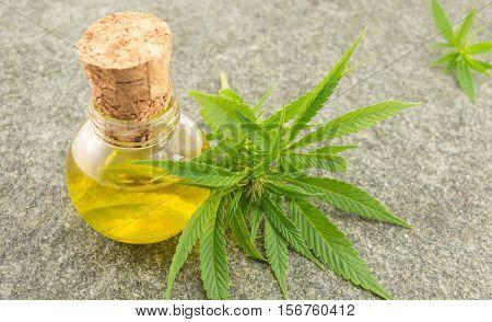 Marijuana Leaf And Cannabis Oil
