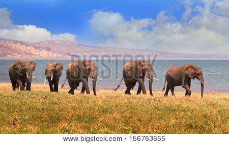 Memory of elephants on the lush plains in Bumi National Park - on the edge of Lake Kariba, Zimbabwe, Southern Africa