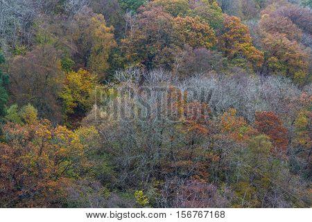 Autumn Fall Scene, Trees, Wales, United Kingdom.
