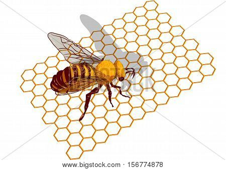 Beeswax. Macro of working bee on honeycells