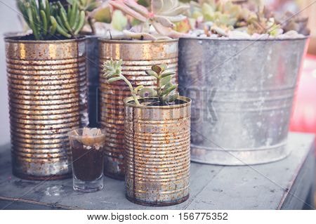 succulents in rustic used tins Eco and reuse concept