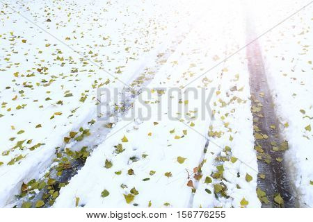 protectors of cars on snow and fallen green leaves with sunny hotspot, Car tracks, winter road