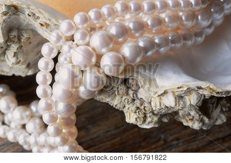 A close up image of a string of pearls on an oyster shell.