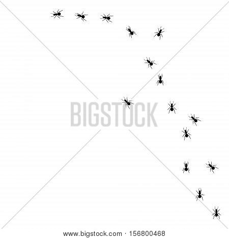 Ant Road Vector