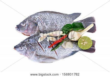 Gutted scaled and sliced Nile Tilapia fish with herbs on white background
