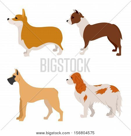 Collection of purebred dogs spaniel and terrier, animal doggy, vector illustration