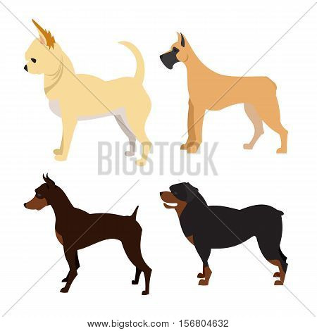 Purebred dogs set. Chihuahua and great dane, doberman and rottweiler, vector illustration