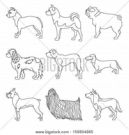 Collection of breeds dog in line style. Profile animal set and young doggy, vector illustration