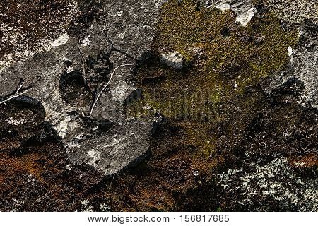 Stone surface with multicolored mosses and lichens closeup. Lichens background.