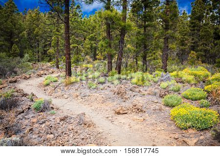 Footpath In The Mountain Forest In