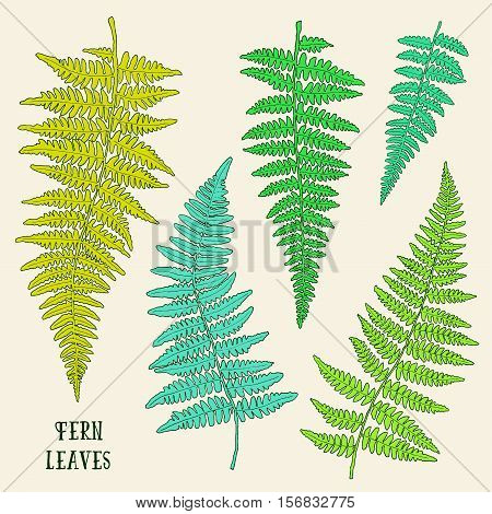 Fresh green ink hand drawn fern leaves isolated on background. Vector iilustration