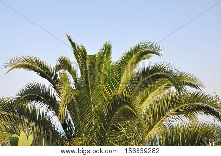 Top of palm tropical subtropical horizontal picture background
