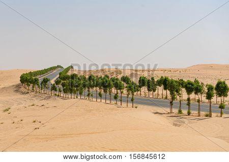 Tree lined road through barren desert landscape