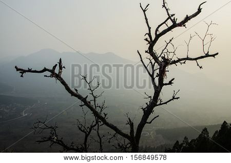 China, a suburb of Qingzhou day Yunshan, a dead, stubborn stand at the top of the hill.