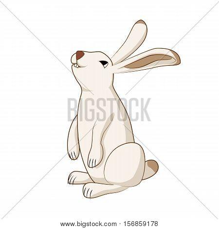Vector illustration rabbit, cute hare bunny isolated