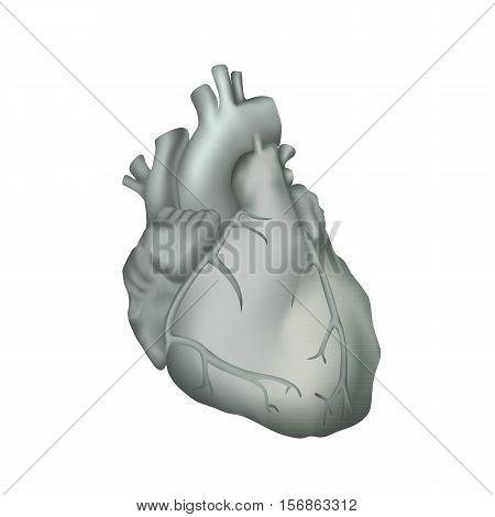 Human heart. Anatomy illustration. Gray image, white background
