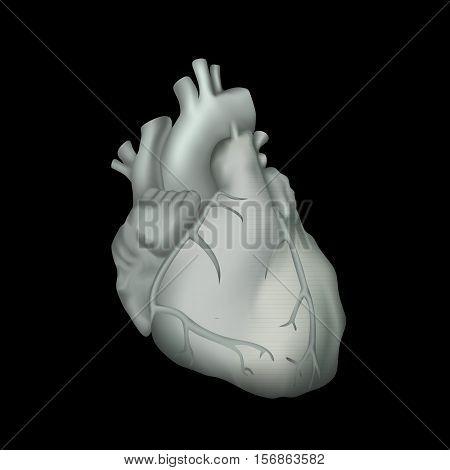 Human heart. Anatomy illustration. Gray image, black background