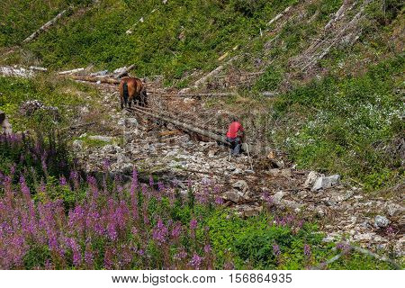 Hard work of man and horse in inaccessible mountain areas.