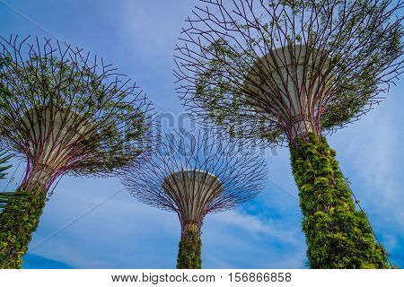 SINGAPORE-JULY09 : Day view of The Supertrees Grove at Gardens by the Bay at daytime. SINGAPORE JULY09 2016