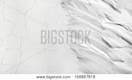 Old White feather