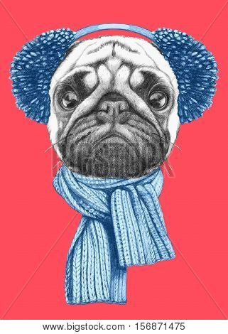 Portrait of Pug Dog with scarf and earmuffs. Hand drawn illustration.