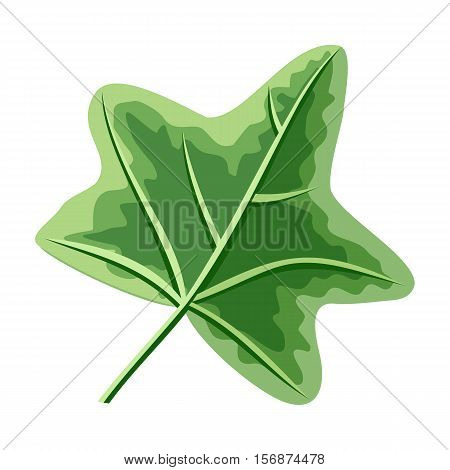 Ivy green leaf isolated on white. Hedera or ivies. Mistletoe. Can be used for greeting card, postcard design. Winter season happy holidays. New Year and Christmas concept. Vector in flat style.