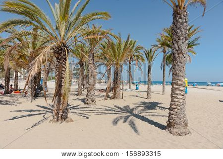 Xabia, Spain - September 7, 2016: Palm trees provide some shade for beach-goers to relax under on Xabia beach on Mediterranean Costa Blanca Spain