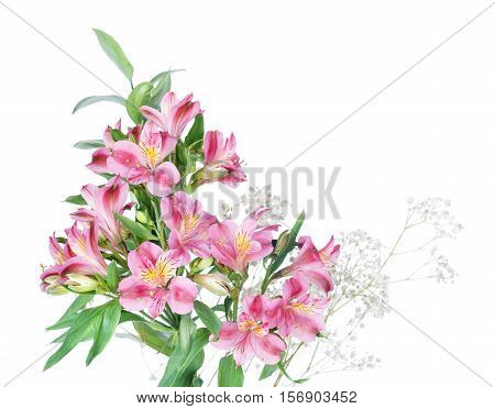 Beautiful bouquet of red alstromeria flowers isolated on a white background