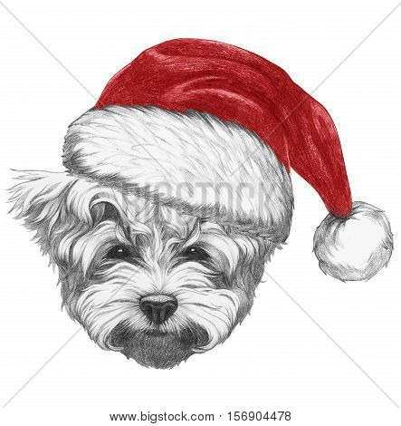 Portrait of Maltese Puddle Dog with Santa Hat . Hand drawn illustration.