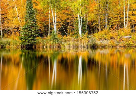 Birch trees with autumn colors reflect in the mirror like surface of a quiet lake in the Upper Peninsula of Michigan. Lake Plumbago offers many views like this in the fall season