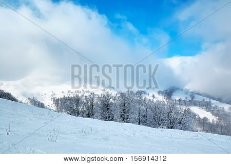 The Winter landscape with snow covered trees and snowstorm