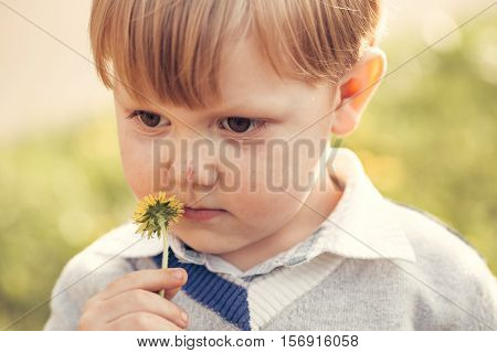 Cute baby boy child with blond hair sniffs at flower yellow dandelion outdoors on summer day on natural background