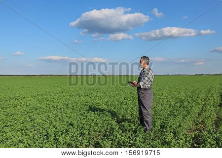 Farmer In Clover  Field