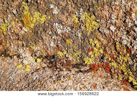 Colorful Lichens growing on rocks and boulders in Joshua Tree National Forest in California. Lichens are moss like plants