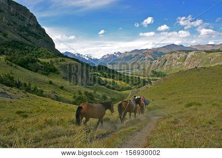 horses in the green hills of Patagonia el chalten argentina