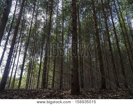 Tree background nature environment outdoor plant trunk