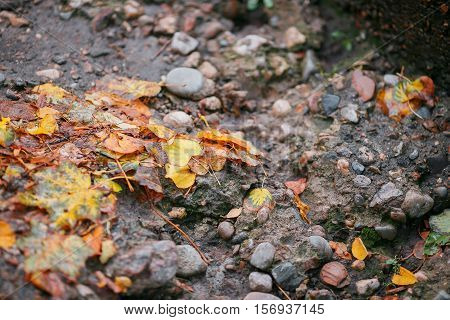 orange and yelow leaf autumn leaf lying on the street