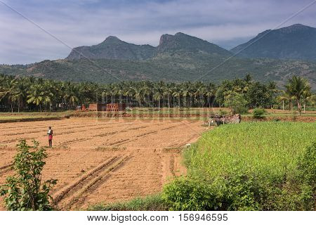 Dindigul India - October 24 2013: Rural scenery near Karattupatti in Tamil Nadu shows the hills at the horizon fallow land several crops such as palm trees and veggies. Brick yard and man in photo. Blue sky with clouds.